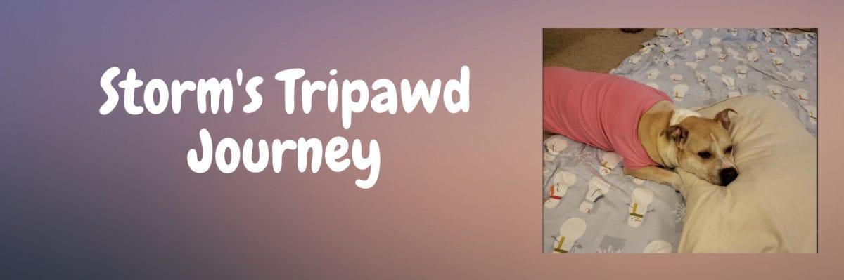 Storm's Tripawd Journey